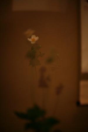 IMG_5871.jpg