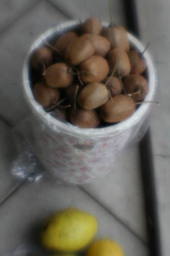 fruit0002.jpg