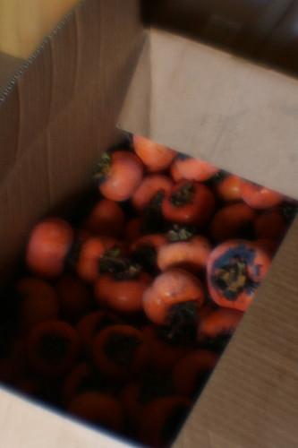 fruit0003.jpg