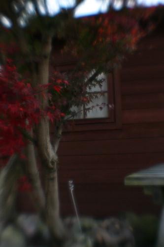 little house_004.jpg